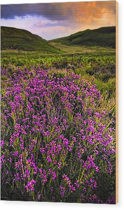 Lucky Heather Wood Print by Meirion Matthias
