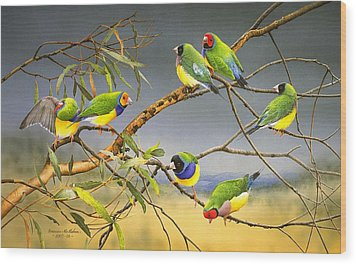 Lucky Seven - Gouldian Finches Wood Print by Frances McMahon