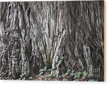 Lucky Tree Wood Print by Amanda Barcon