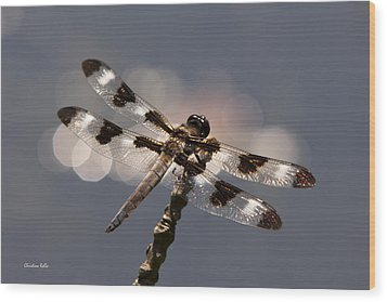 Luminous Dragonfly Wood Print by Christina Rollo