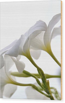 Wood Print featuring the photograph Luminous Plumeria - White by Darla Wood