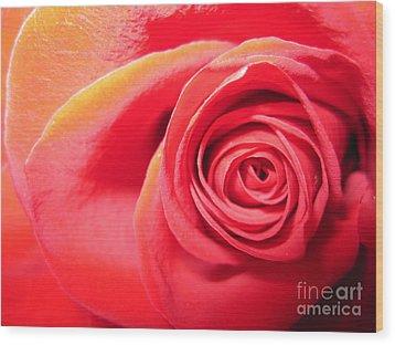 Luminous Red Rose 1 Wood Print