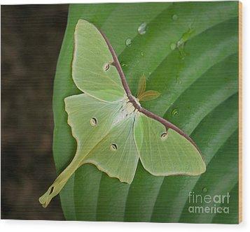 Luna Moth Wood Print by Alana Ranney