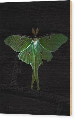 Lunar Moth Wood Print by Bob Orsillo