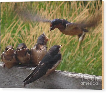 Lunch Is Served To The Fourth Baby Barn Swallow Wood Print by J McCombie