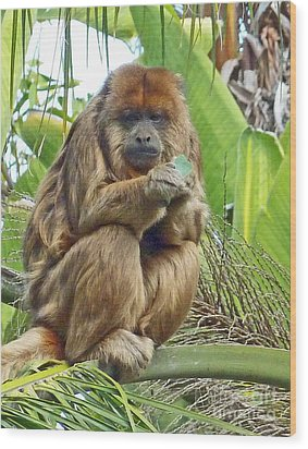 Lunch Time - Santa Ana Zoo Wood Print