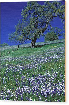Lupine And The Leaning Tree Wood Print by Kathy Yates