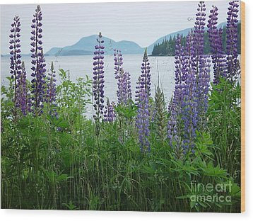Lupine At Sorrento Wood Print
