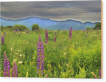 Lupine Breeze  Wood Print by Andrea Galiffi