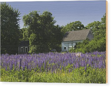 Lupine Flowers Near Round Pond Maine Wood Print