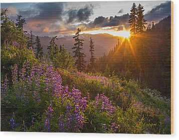 Lupine Meadows Sunstar Wood Print