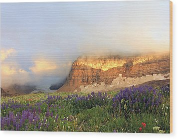 Lupine Wildflowers On Mount Timpanogos Wood Print by Johnny Adolphson