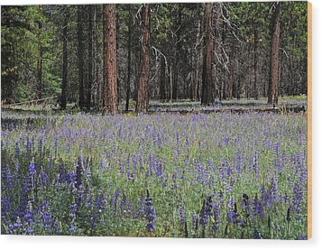 Lupines In Yosemite Valley Wood Print by Lynn Bauer