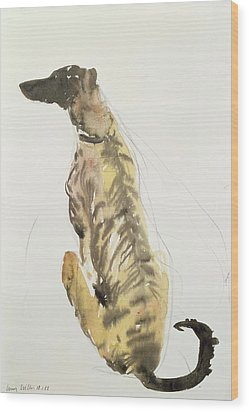 Lurcher Sitting Wood Print by Lucy Willis