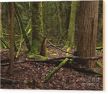 Lush Green Forest Wood Print by Mary Mikawoz