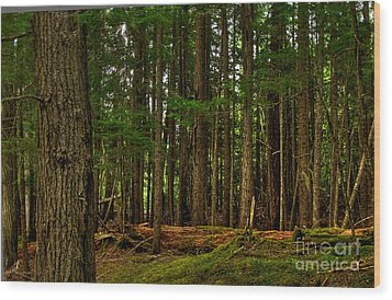Lush Green Forest Wood Print
