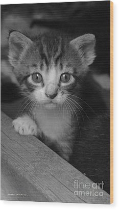M Kitten Wood Print by Tannis  Baldwin