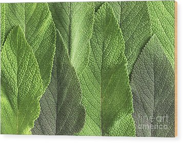 M7500790 - Sage Leaves Wood Print by Spl