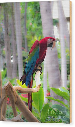 Wood Print featuring the photograph Macaw by Angela DeFrias