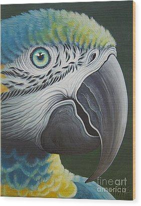Macaw Head Wood Print by Tish Wynne