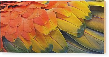 Macaw Yellow Wood Print by Colleen Renshaw