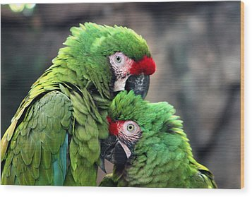 Macaws In Love Wood Print by Diane Merkle