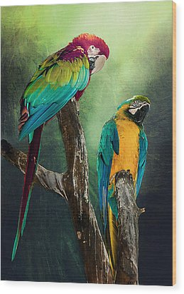 Macaws Siesta Time Wood Print