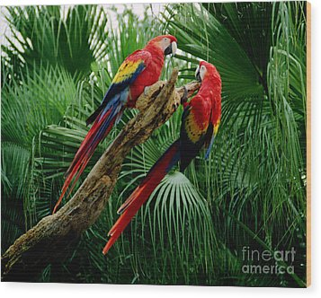 Wood Print featuring the photograph Macaws by Tom Brickhouse