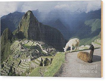 Machu Picchu And Llamas Wood Print by James Brunker