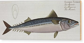 Mackerel Wood Print by Andreas Ludwig Kruger