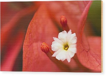 Macro Bougainvillea Bloom 1 Wood Print