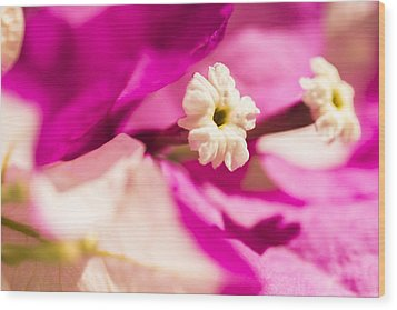 Macro Bougainvillea Bloom 2 Wood Print