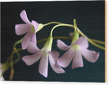 Macro Clover Wood Print
