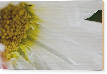 Macro Daisy Wood Print by John Holloway