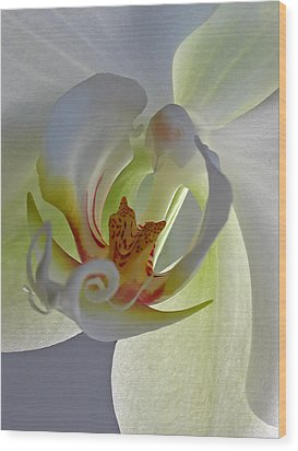 Macro Photograph Of An Orchid  Wood Print by Juergen Roth