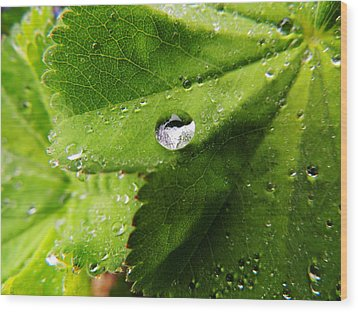 Macro Raindrop On Leaf Wood Print
