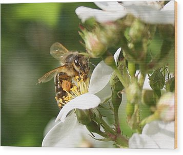 Mad Honeybee Wood Print