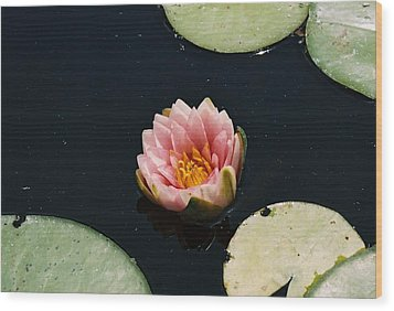 Wood Print featuring the photograph Madam Wilfron Gonnere Aka. Water Lily by Ramona Whiteaker
