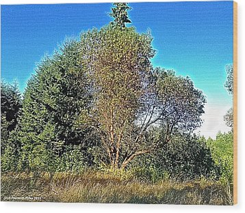 Madrona Wood Print by Tobeimean Peter