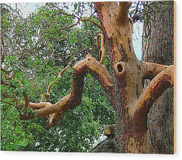 Wood Print featuring the photograph Madrone Character by Wendy McKennon