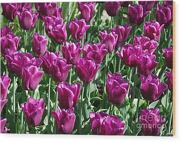 Wood Print featuring the photograph Magenta Tulips by Allen Beatty