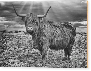 Magestic Highland Cow Wood Print by John Farnan