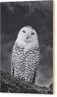 Magic Beauty - Snowy Owl Wood Print by Adam Olsen
