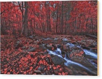 Magic Forest 1 Wood Print by Thomas Born