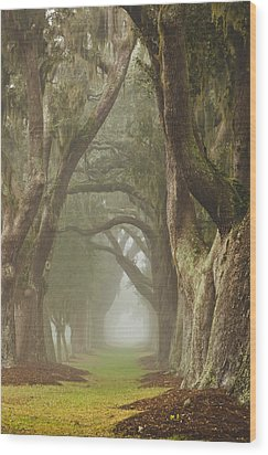 Magic Forest Wood Print by Barbara Northrup