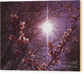 Wood Print featuring the photograph Magical Blossoms by Vicki Spindler
