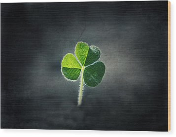 Magical Clover Wood Print by Melanie Lankford Photography
