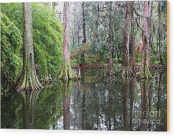 Magical Cypress Swamp Wood Print by Carol Groenen