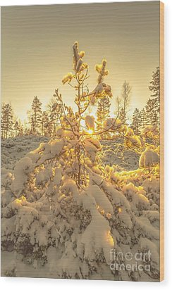 Magical Moments In The Middle Of January Wood Print