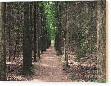 Magical Path Wood Print by Bruce Patrick Smith
